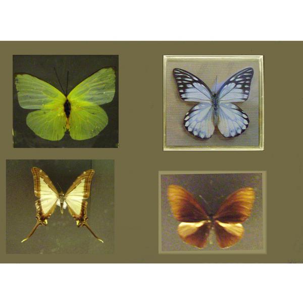 Papillons g.jpg