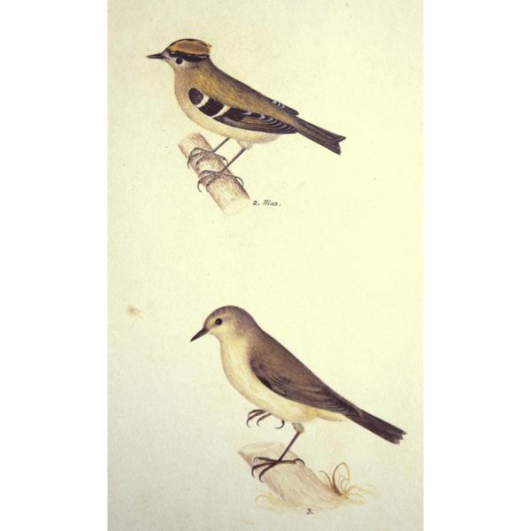 31vogelbuch3g.jpg