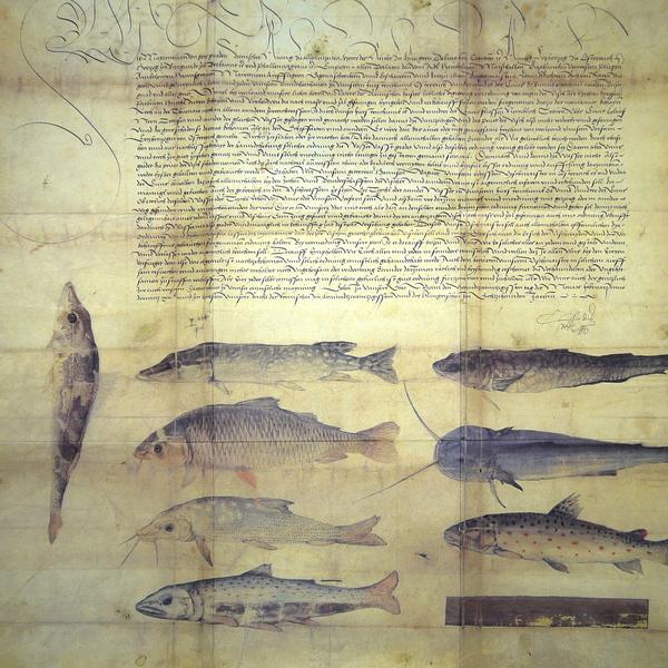 28 ley peces.jpg