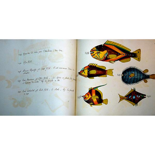 29 peces tropicalesg.jpg