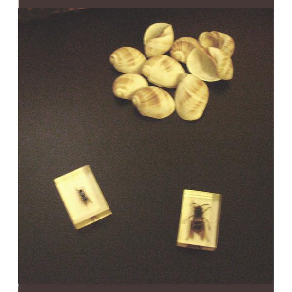 Conchitas e insectos (caligrafía).jpg