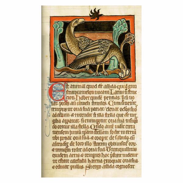 19 avestruz bestiario.jpg