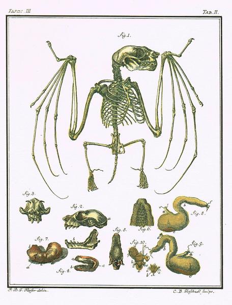 Spicilegia Zoologica