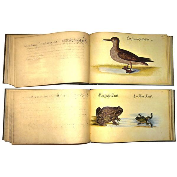 Vogel, Fisch und Thierbuch