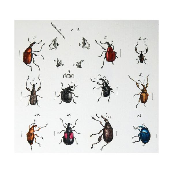 Entomologie ou Histoire naturelle des insectes, avec leurs caractères génériques et specifiques ...