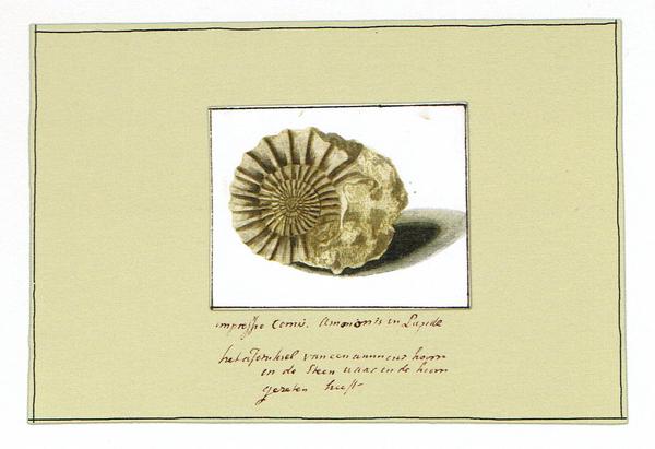 La Colección Van Berkheij : arte y naturaleza en el Museo Nacional de Ciencias Naturales