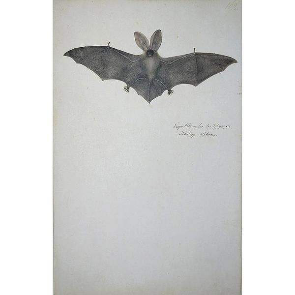 Das grosse Vogelbuch des Olof Rudbeck d.J. &lt;br /&gt;<br />