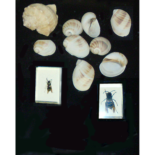 Conchitas e insectos (caligrafía) g.jpg